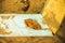 Stock Image : Leaf on a wood