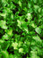 Stock Image : Leafy green background