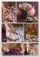 Stock Image : Legumes - Collage