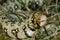 Stock Image : Leopard moray eel