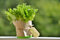 Stock Image : Lettuce