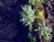 Stock Image : Lichen