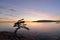 Stock Image : Lighthouse Park - Juniper Point