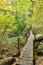 Stock Image : Lindeman Lake Trail