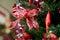 Stock Image : Lintdecoratie op Kerstboom