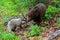 Stock Image : Little Bear