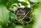 Stock Image : Little Bird Nestlings