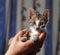 Stock Image : Little cute cat