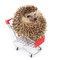 Stock Image : Little hedgehog and shopping cart.