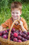 Stock Image : Little kid with basket of plum