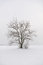Stock Image : Lone tree in snow