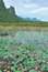 Stock Image : The lotus marsh and mountain