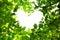 Stock Image : Love nature concept