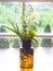 Stock Image : Lovely flowers