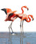 Stock Image : Loving flamingo couple