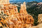 Stock Image : Majestic Pires at Bryce Canyon N.P.