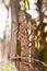 Stock Image :  Malagasy γιγαντιαίος χαμαιλέοντας