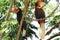Stock Image : Male and female Hornbills