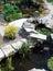 Stock Image :  Mali woda ogródu stawy