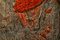 Stock Image : Man in Red Cap