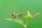 Stock Image : Mantis on leaf