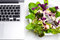 Stock Image : Many color salad with business laptop isolated on white