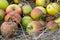 Stock Image :  Manzanas viejas