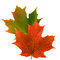Stock Image : Maple leaf color in fall