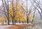 Stock Image : Maple Tree under snow