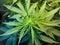 Stock Image : Marijuana Cannabis Plant