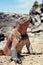 Stock Image : Marine iguana, Galapagos Islands, Ecuador