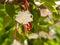 Stock Image : Martenitsa on a flowering tree in spring