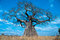 Stock Image : Mighty Baobab Tree