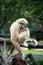 Stock Image : Monkey