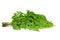 Stock Image : Moringa branches