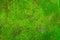 Stock Image : Moss