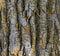 Stock Image : Mossy Tree Bark