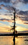 Stock Image : Mossy tree sunset