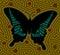 Stock Image :  Motyl