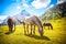 Stock Image : Mountain Horses