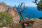 Stock Image : Mountain tree and sea