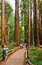 Stock Image : Muir National Monument Cathedral Grove Visitors