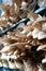 Stock Image : Mushroom Planting