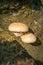 Stock Image : Mushroom on Tree Trunk