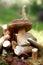 Stock Image : Mushrooms Set