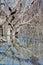 Stock Image : Mystrious dead trees Menindee Lakes Australia
