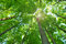 Stock Image : Nature forest trees