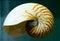 Stock Image : Nautilus