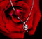 Stock Image : Necklace and rose