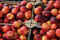 Stock Image : Nectarines at a market